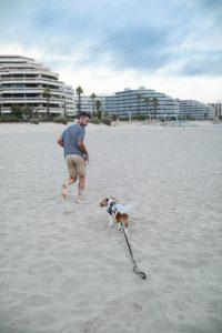 avoir un chien pendant les vacances parisgrenoble