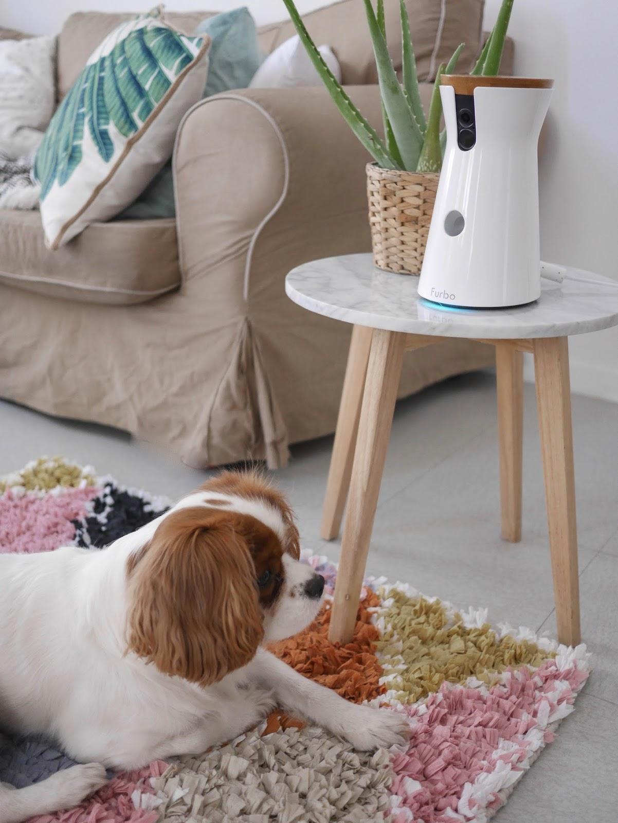 camera surveillance chien parisgrenoble